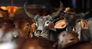 Beef ban 2