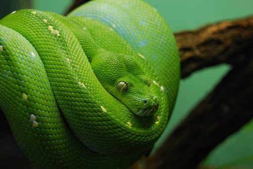 Snakes are mother natures colour pallet