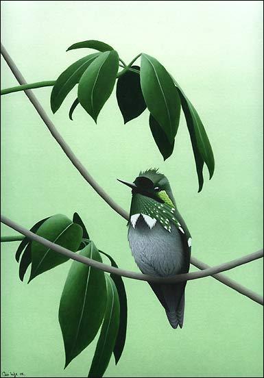 nice small bird Robin by Chris Lodge