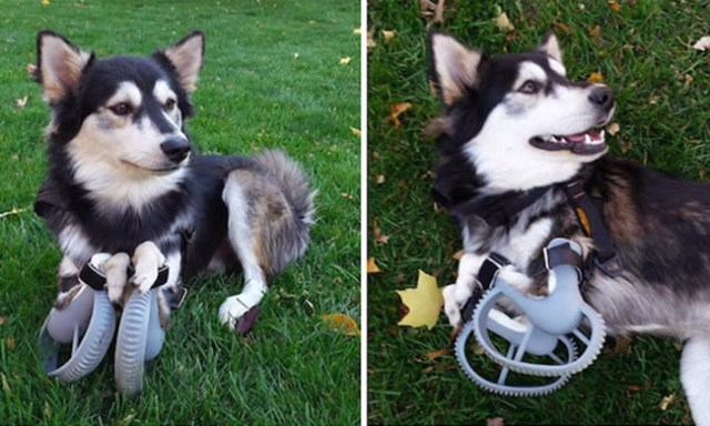 3d-printed-prosthetic-legs-deformed-paws