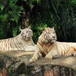 Pictures_and_Singapore_Travel_Tips