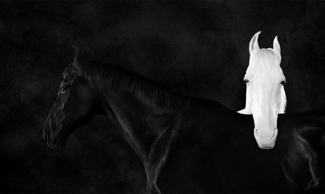dilip Vishwamitra Bhatia, Horses Horses Photography