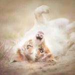 Dog Portraits Photography by Alicja Zmysłowska (17)