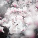 Dog Portraits Photography by Alicja Zmysłowska (20)