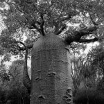 Famous_Photographs_of_Trees_by_Beth_Moon (18)