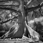 Famous_Photographs_of_Trees_by_Beth_Moon (23)