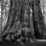 Famous_Photographs_of_Trees_by_Beth_Moon (25)