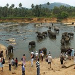 Pinnawala Elephant Orphanage_3