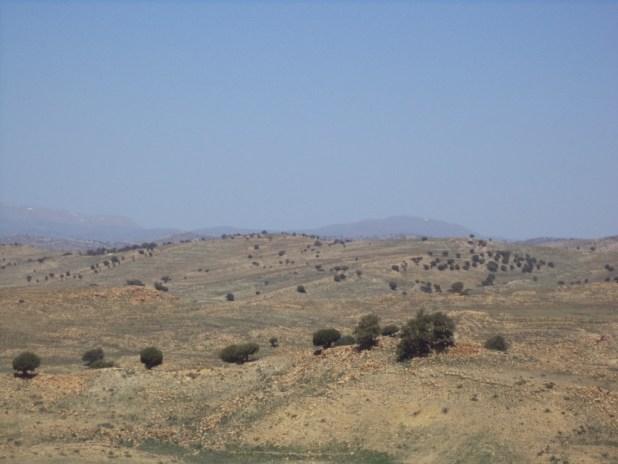 الصورة 1 مجموعة من أشجار آيوال في حالة جد سيئة بمنطقة هكوكث