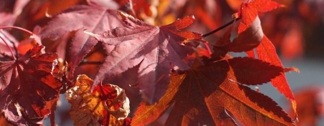 Informazioni: 349-7736093 E-mail: oasighirardi@wwf.it Web: www.oasighirardi.org L'oasi dei Ghirardi si estende nei comuni di Borgo […]