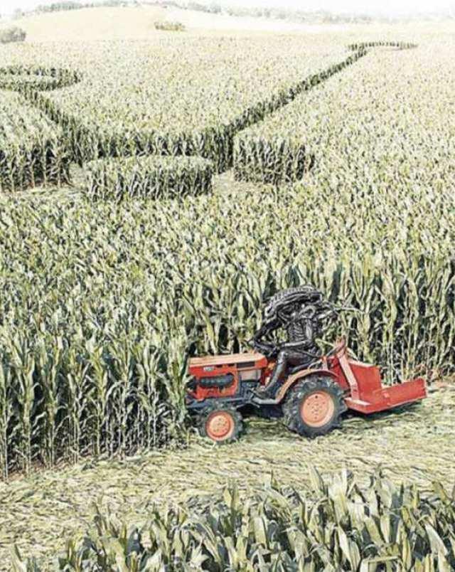 crop circles 2012