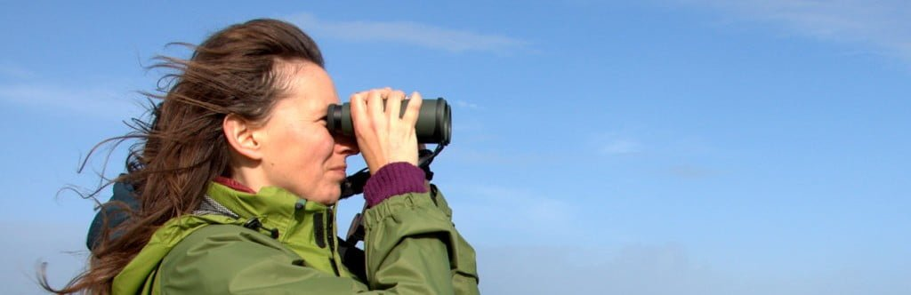 Birdwatching for Beginners Revisited