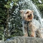 Vom Tod eines Hundes in Magdeburg