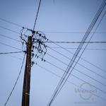 Diese Vögel haben mit der Erhöhung der Strompreise nichts  zu tun!
