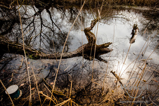 Elbdeich und Prester See