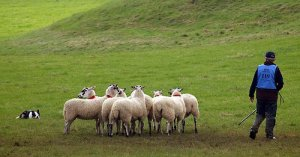 World Sheepdog Trials