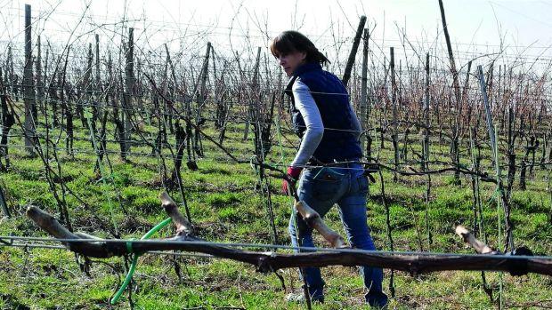 Winemaker Sinéad Cabot
