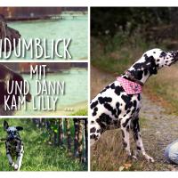 Der Hundumblick: 6 Fragen an Ricarda von Und dann kam Lilly ...