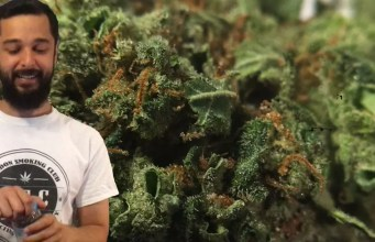 Super Bud Cannabis Strain