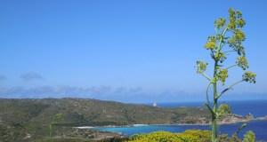 Cala d'Arena ed in lontananza il faro di Punta Scorno.