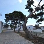 Asinara Cala d'Oliva - Porto