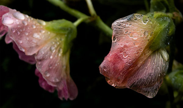 Lumix Flower