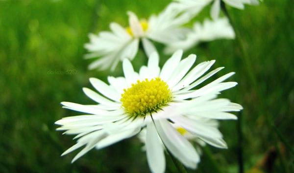 The Disease of Dancing Flowers