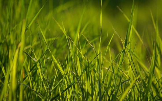 spring-grass-wallpaper
