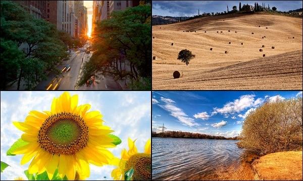 Summer Photography