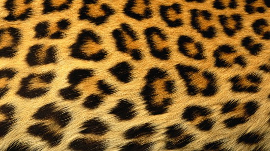 14-High-Resolution-Animal-Fur-Texture-Thumb01