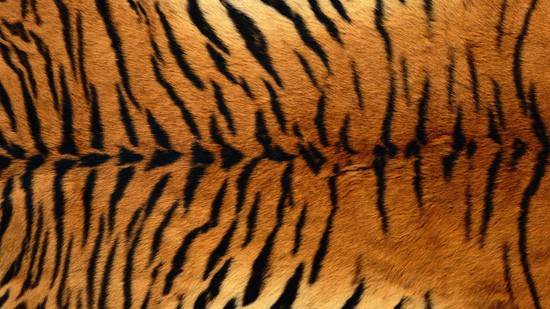 14-High-Resolution-Animal-Fur-Texture-Thumb12
