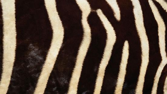 7-Animal-Fur-Texture-Thumb05
