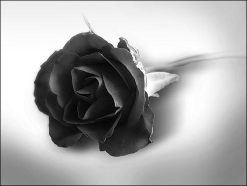 Black-Rose-dark-desktop-backgrounds