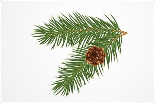 Pine-or-Christmas-Tree-Branch-with-a-Cone-Vector