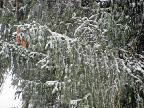Snowy-Green-winter-wallpaper