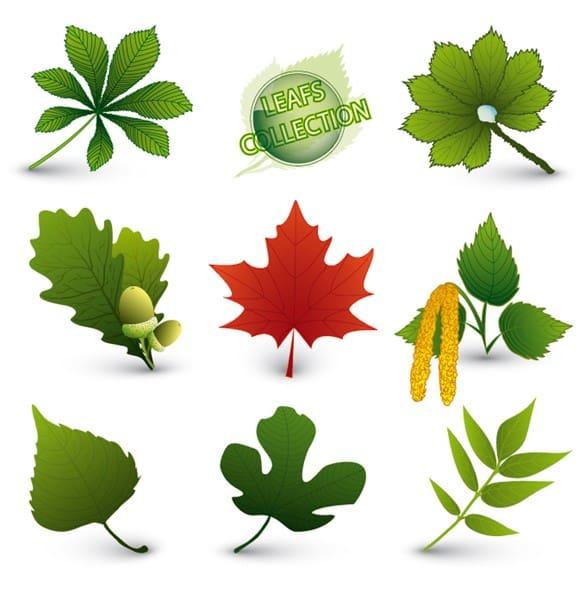 Fresh Green Leaves Foliage Vector Set