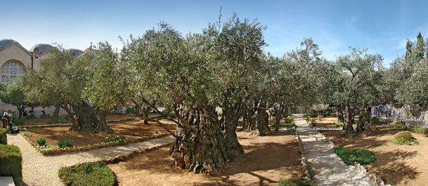 Gethsemane Photo: Tango7174