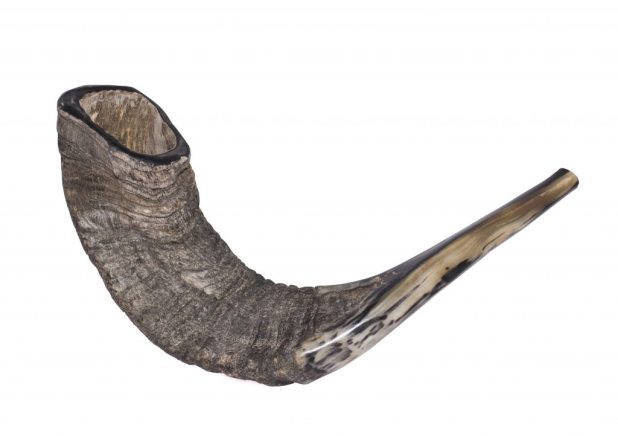 Shofar (Jewish ritual horn) שופר Photo: Zachi Evenor