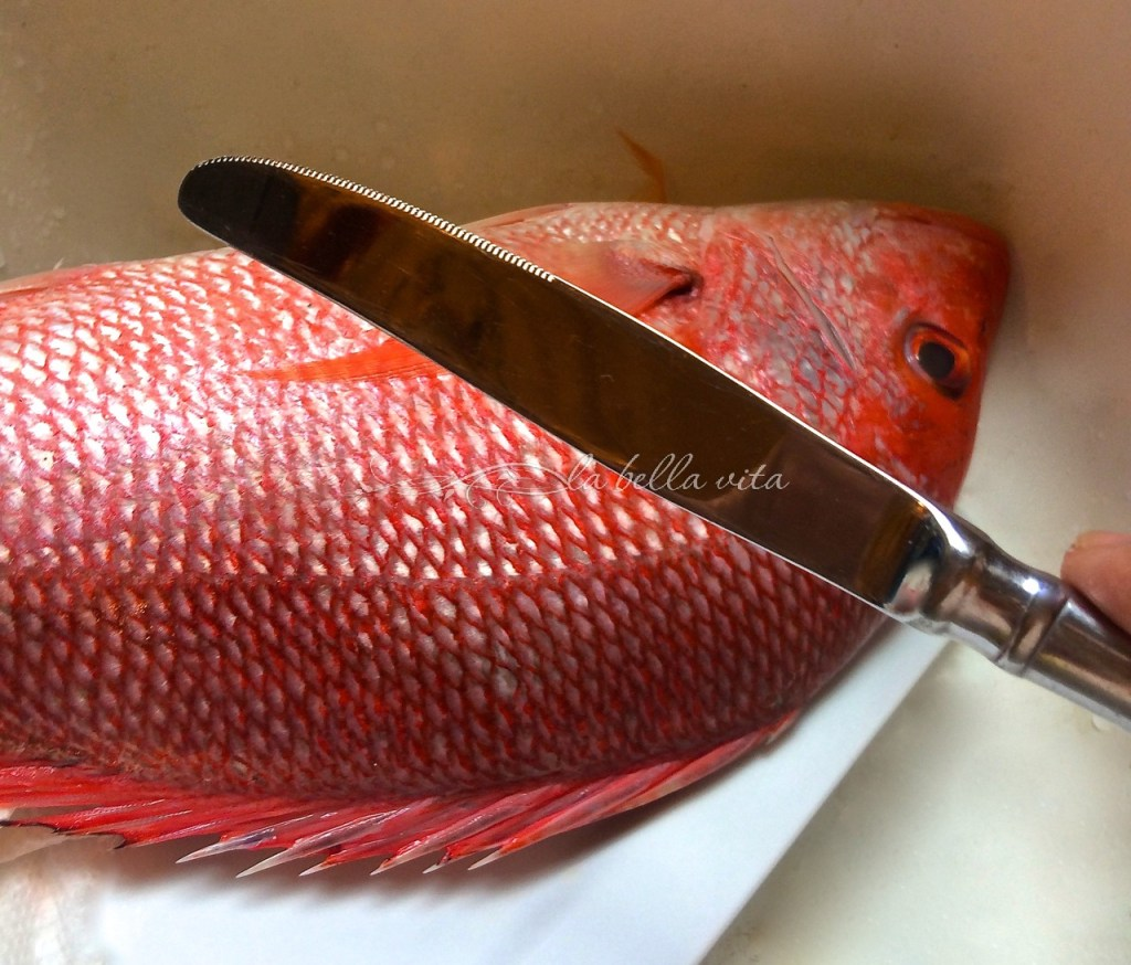 How to remove scales from fish la bella vita cucina for Fish cleaning gloves