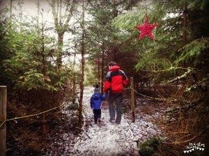 Santa's Woodland Experience