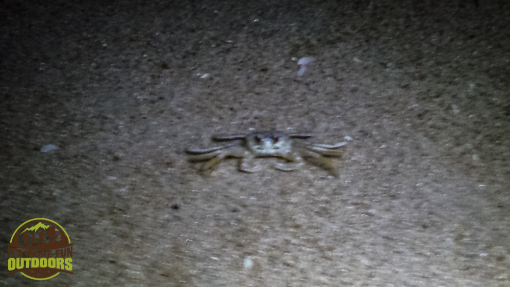 We discovered GHOST CRABS while waiting for the sunrise! They were EVERYWHERE!!  Assateague Island National Seashore, MD