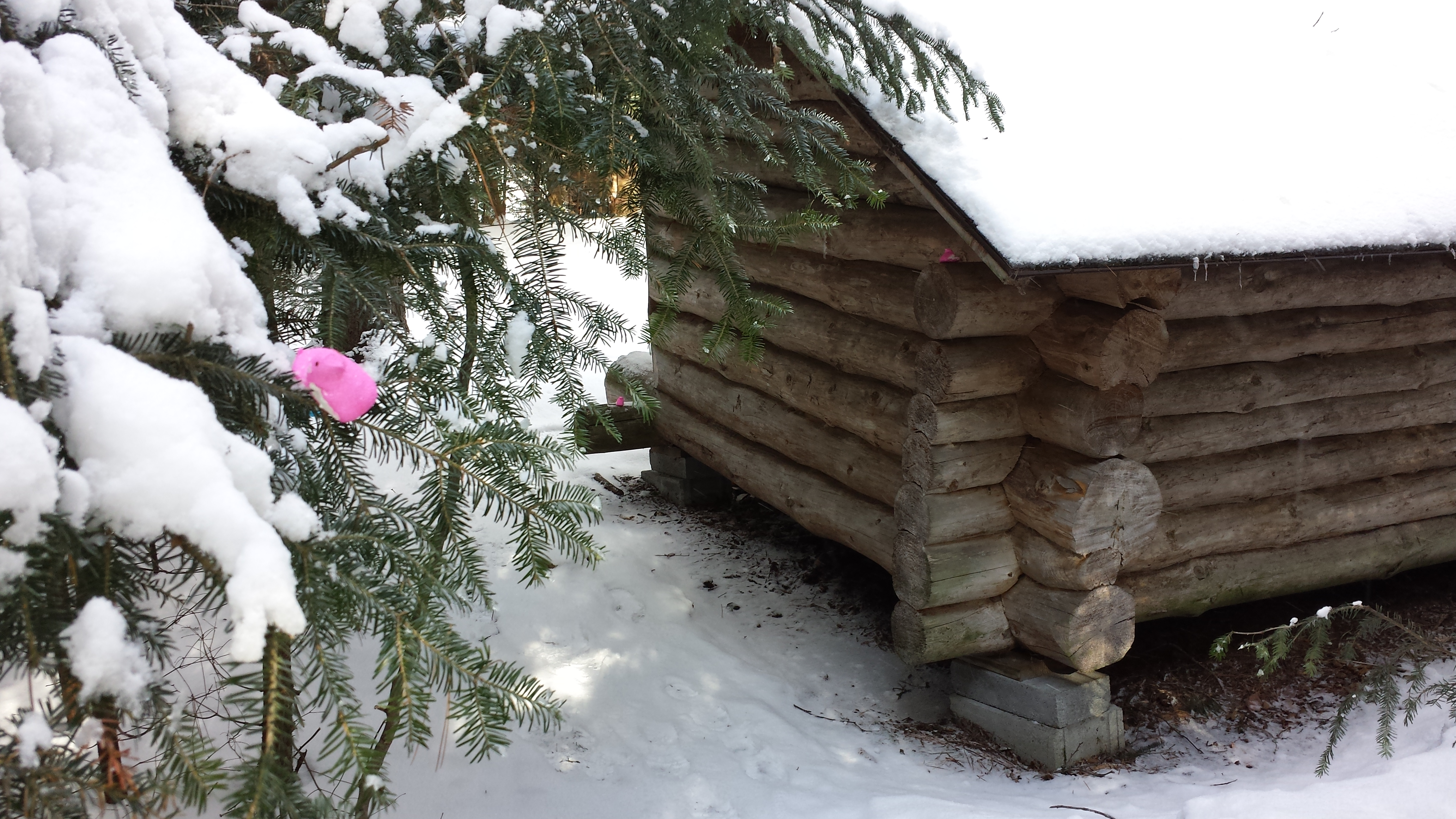 The EASTER BUNNY came to the Lean to!! Easter Egg hunt and lean to camping in the Winter at ADK's Wilderness Campground at Heart Lake.