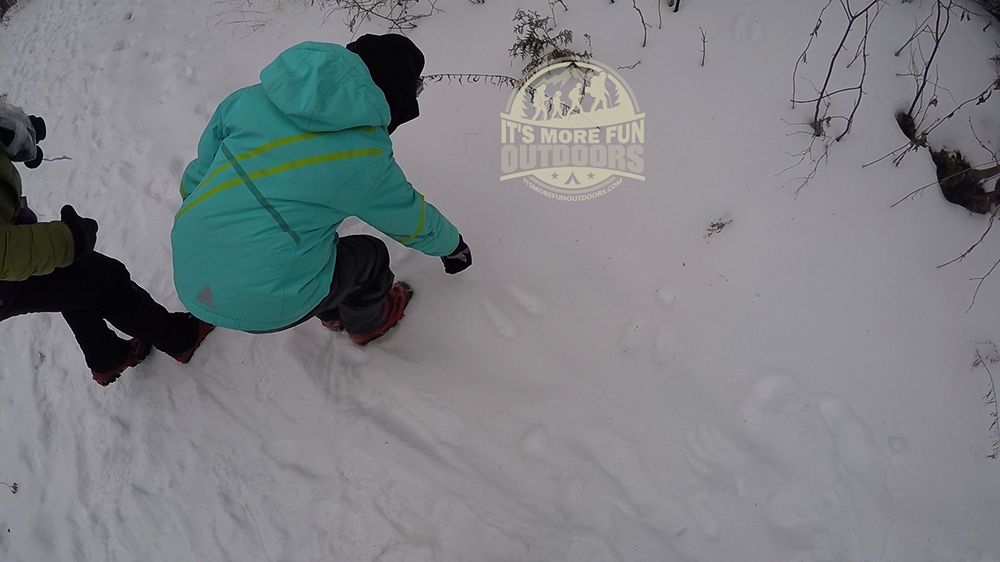 Dora checking out the MANY Snowshoe Hare tracks along the trail to Belfry Fire Tower. 2/15/2016: Belfry Mountain Winter Fire Tower Challenge Hike!