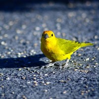 Do you have any canaries to warn you of trouble?