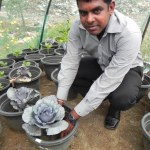 The IWMI greenhouse grows cabbage and spinach using different compositions of compost and pellets.
