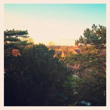 Evening Sun from office window