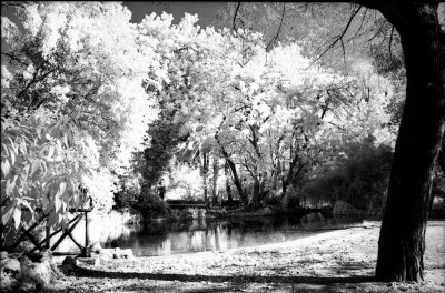 Rollei 400s Infrared. It Works!