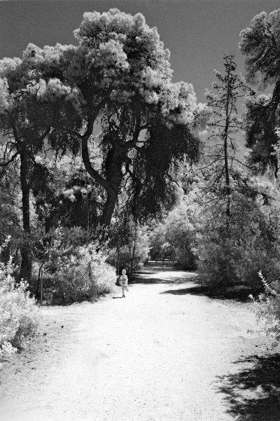 Walkway in the Grove III
