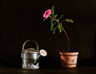 Still Life with Flower and Watering Can.