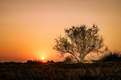 Tree on a Marshland